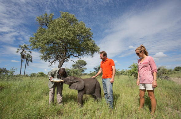 Feed baby elephants at Abu Camp on an Elephant safari in Okavango Delta.