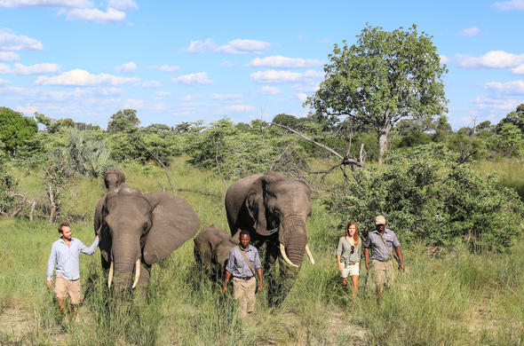 Walking safaris with elephant at Abu Camp.
