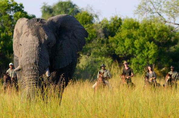 See Elephant on a Horseback safari in Okavango Delta.