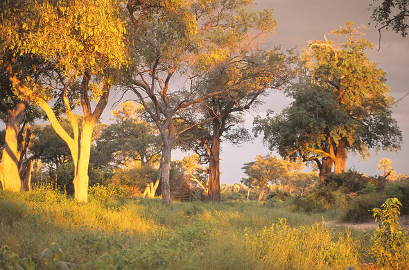 Late afternoon in the Okavango. Lee Kemp
