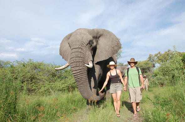 Walk with elephants at Baines Camp.