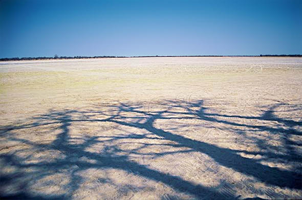 Shade at the edge of the Kalahari.