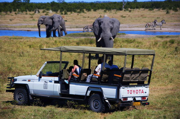 Abundance of African wildlife in Botswana.