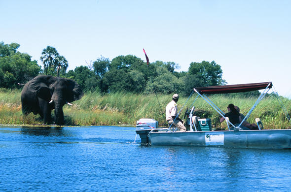 Moremi Concession Area | Botswana Okavango