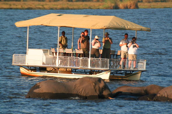Spot Elephants bathing in the Chobe River during a boat safari.
