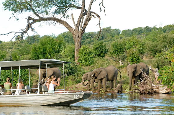 Chobe River safari from Chobe Chilwero Lodge