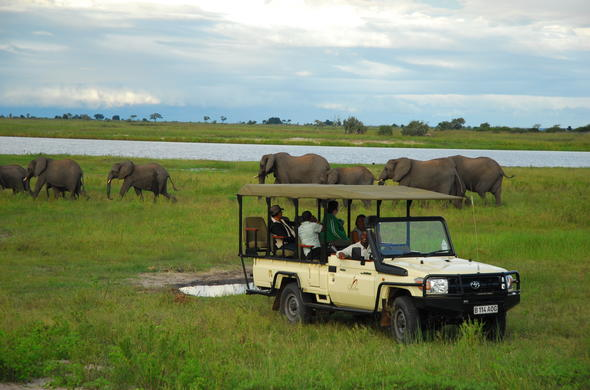 Game drive through the Chobe National Park.