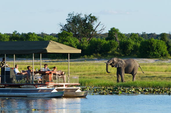 See elephants from a safari boat on the Chobe River.