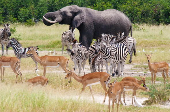 Wildlife of Chobe National Park.