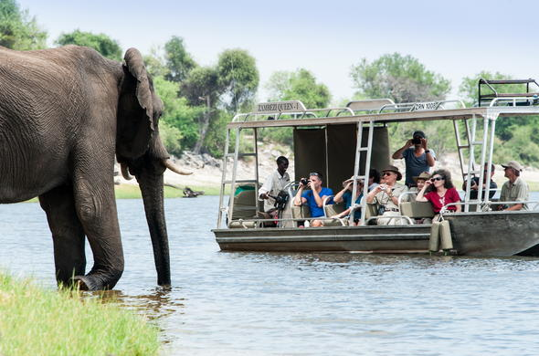 Chobe river boat safari excursions to see Elephant.