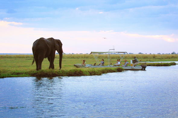 Chobe River boat safari yields an elephant sighting.