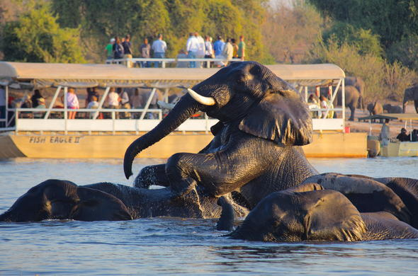 See Elephant and wildife from a Chobe safari boat.