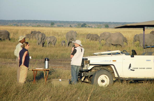 See wildlife on a game drive in Chobe National Park.