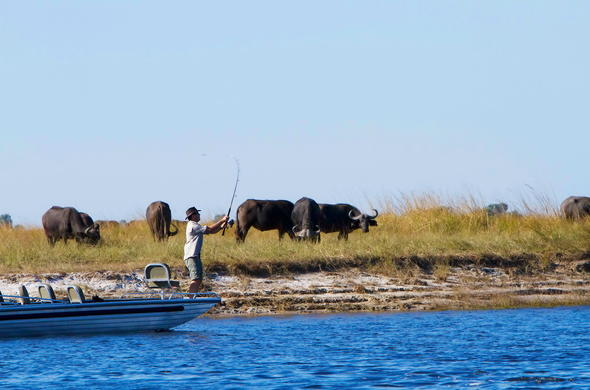 Fishing excursion from boat on Chobe River.