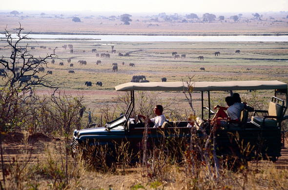 Spotting herds of Botswana wildlife during a game drive.
