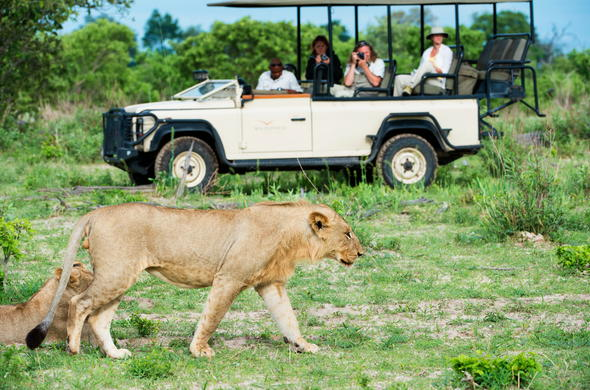 Spotting a lioness on a game drive in Botswana.