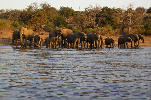 Chobe River. Elephants at dusk. Simon Bloomhill