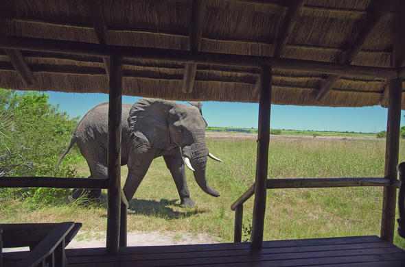 Elephant at Selinda Camp