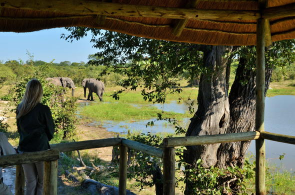 Watching elephants from a game viewing deck.
