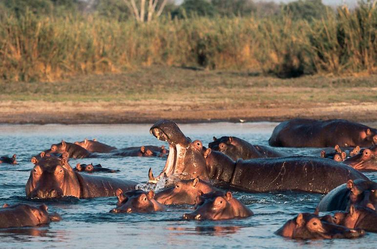 Chobe Climate And Environment Chobe Travel Guide - Chobe river