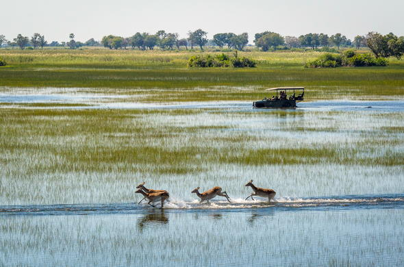 Off-road safari through the heart of the Okavango Delta.