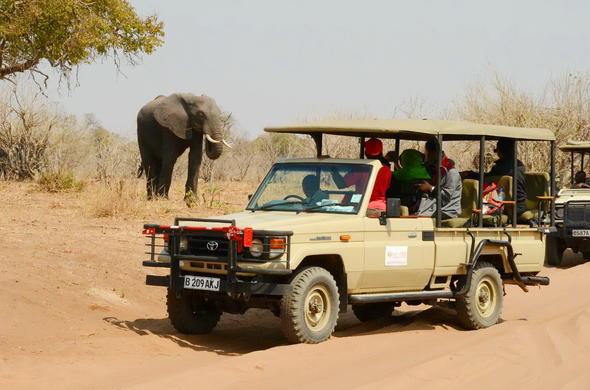 Exciting game drives on Chobe Island.