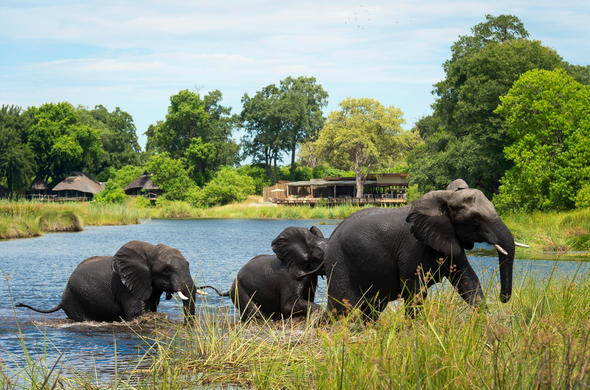 Elephants near Kings Pool in Linyanti.