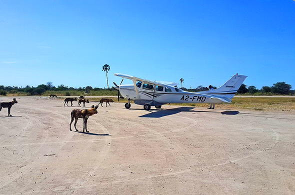 Fly directly into the Makgadikgadi Pans with a light aircraft.