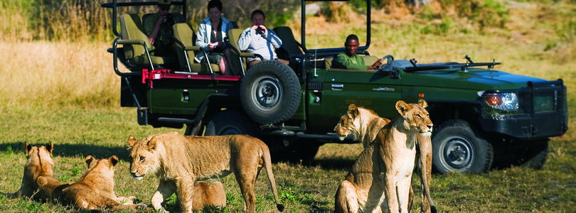 See lions on a game drive on a Linyanti safari.