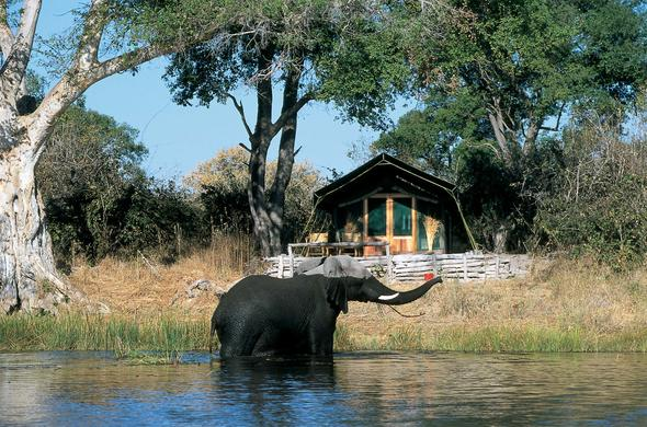 Elephant at your patio. Linyanti Tented Camp. Chobe River