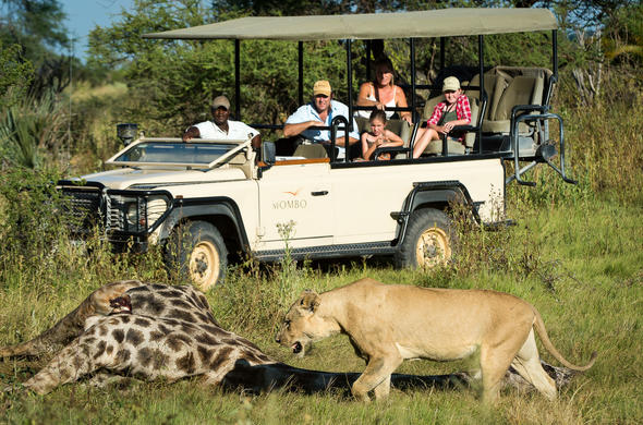 Action-packed game drives where lion hunt their prey.