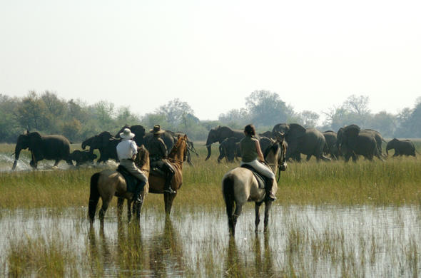 Ultimate Okavango Horse-back safari