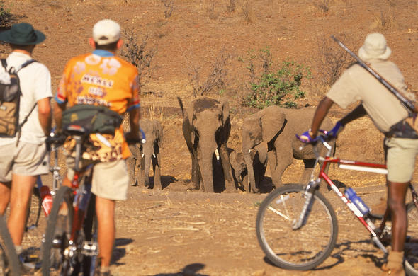 This is unusual. A safari at Mashatu on a bicycle. Tuli