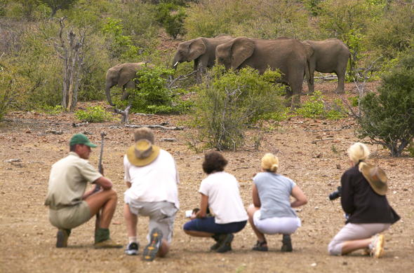 Spotting African elephants during a walking safari.