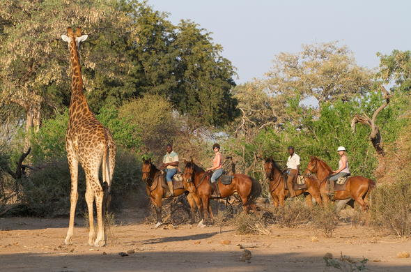 Spotting African wildlife during a horse safari in Botswana.