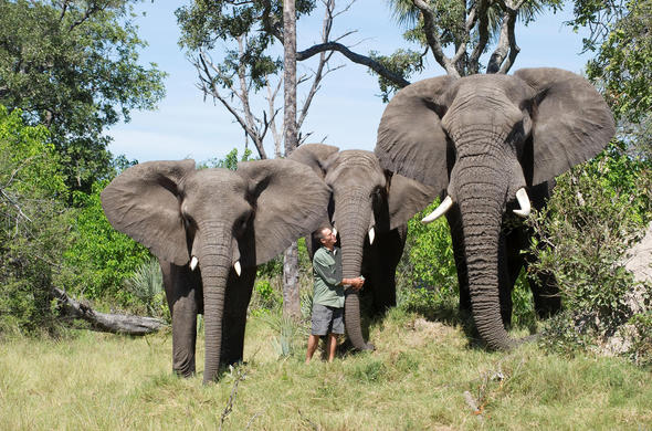 Meet with the Elephants at Stanley's Camp. Okavango
