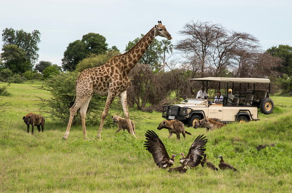 Track an abundance of wildlife on a game drive.