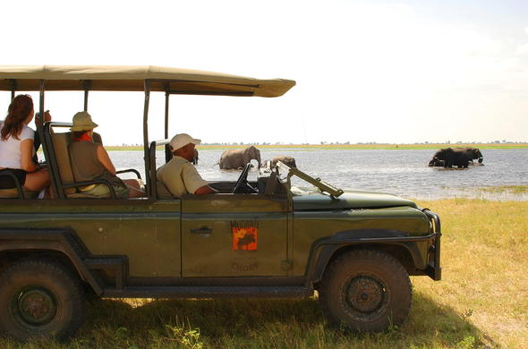 Guided game drive in Chobe National Park.