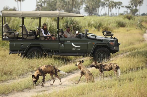 Spot wild dog and other bush roamers on game drives.