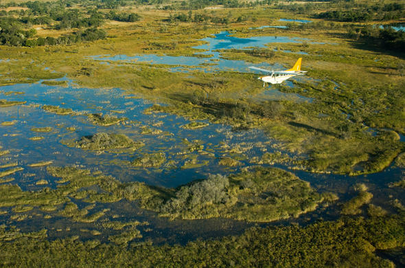 Flying over the Okavango Delta spotting African wildlife from the air.