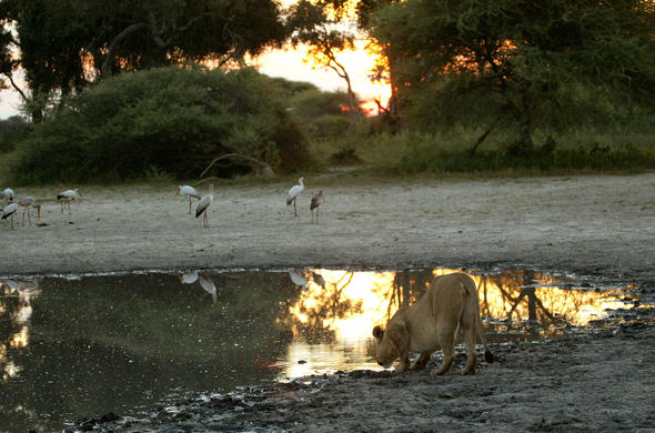 Okavango Waterhole At Sunset. Michael Poliza