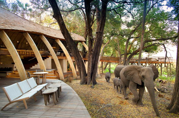 Elephant passing through Sandibe Okavango Safari Lodge.