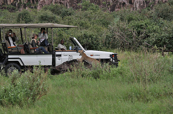 Leopard sighting near Savute Safari Lodge