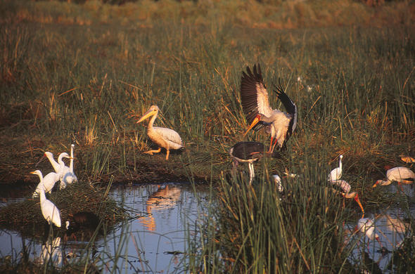 Birds and some water. Okavango Lee Kemp
