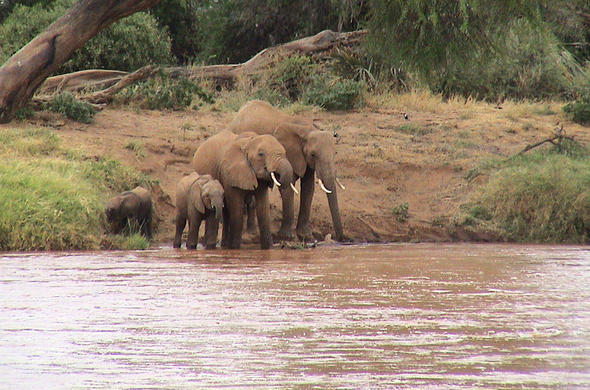 Elephants at the river. Simon Bloomhill