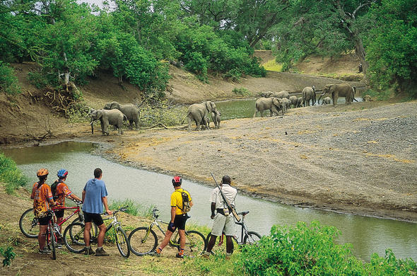 Cycling safari at Mashatu Lodge