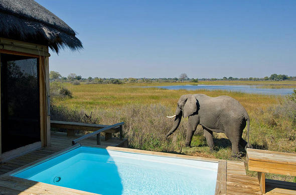 View from your pool deck at Vumbura Plains Lodge