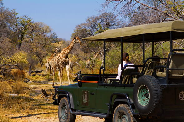 Close encounters with giraffe on a Xakanaxa Camp game drive.