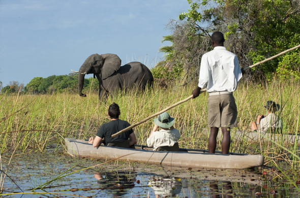 See Elephant while on a mokoro safari.