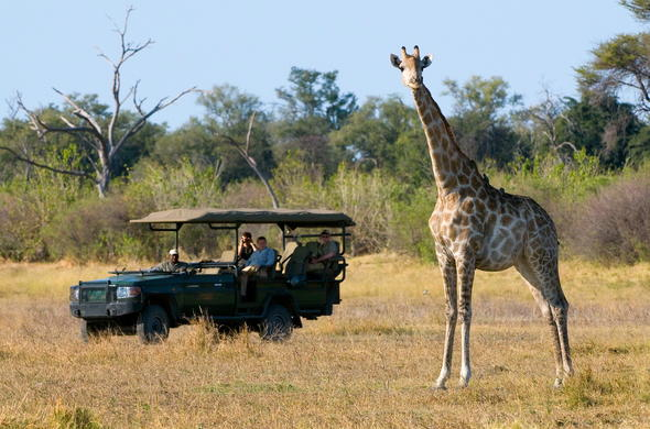 Giraffe spotted on the great plains of the Linyanti.